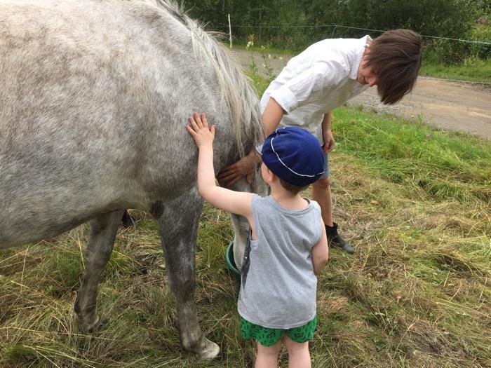 häst, lattefarsor, pappablogg